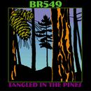 Tangled In The Pines thumbnail