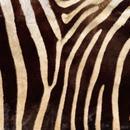 Dancing Zoo thumbnail