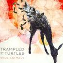 Wild Animals thumbnail