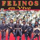 En Vivo - Felinos thumbnail